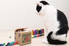 Domino mit Katzen