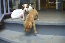 Hunde, die nicht Treppen steigen können oder wollen