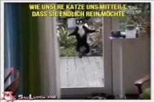 Katze reinlassen