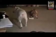 Hund gefällt die Musik
