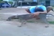 Hundeantrieb