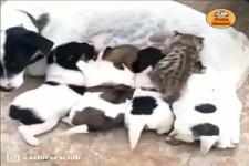 Echt Tierliebe