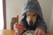 Hund isst mit Menschenhänden