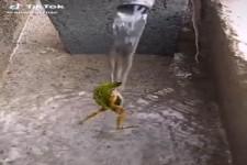 Cooler Frosch