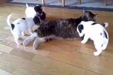 Egal ob Vogel, Hund oder Katze, sie verstehen sich alle