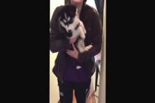 Lustige Hunde-Geräusche