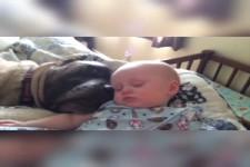 Baby's & Hunde schlafen ( zusammen)