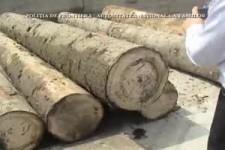 Drevo-z-Ukrajiny