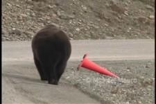 Ein Bär auf der Straße