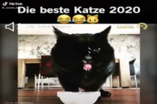 die beste Katze 2020