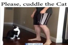 Please cuddle the cat. .