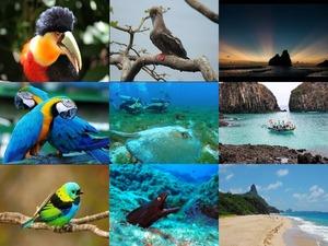 Islands of Fernando de Noronha Brazil