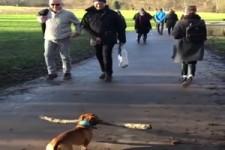 Hunde halten Abstand