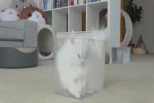 Katzen denken sie passen überall rein