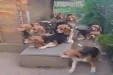super erzogene Hunde