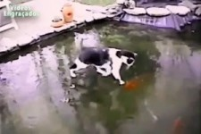 Tiere bringt den Menschen so viel Freude