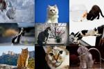 Cat-Life-1---Katzenleben-1.ppsx auf www.funpot.net