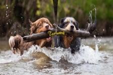 Teamwork - Zusammenarbeit