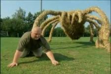 Spinnenexperte
