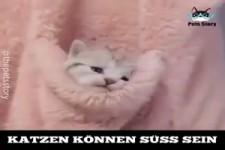 Katzen können süss sein