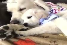 Tiere haben auch ein Herz und ganz viel Liebe