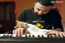 Die Katze mag Klavier