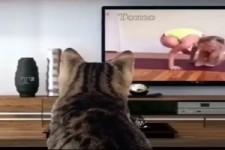 Die Katze macht Yoga