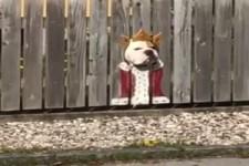 Klasse Guckloch für den Hund
