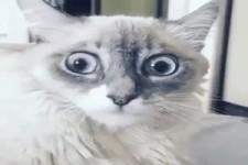 Was sehen meine Augen da?