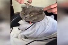 Katzen sind einfach lustig