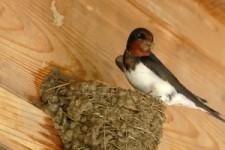 so geht Nest-Bau