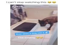 Hundetoilette
