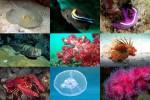 Undersea-1.pps auf www.funpot.net