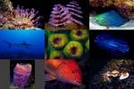 Undersea-2.pps auf www.funpot.net