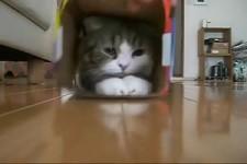 Ich mag Kartons ja sooo gern