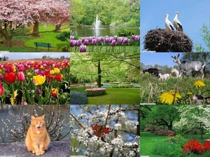 Springtime Symphony 1