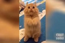 Katzen sind einfach nur lustig und bringen Freude