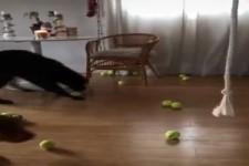 Welchen Ball nehme ich jetzt?