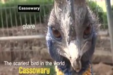 der gruseligste Vogel der Welt -
