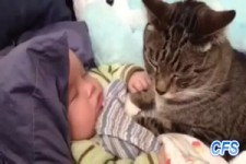 Katzen lieben Baby's