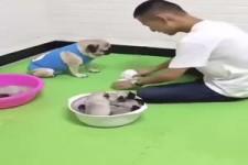 Spiel mit dem Hund
