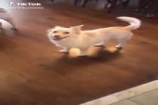Man muss dem Hund zeigen, dass es Gassi geht