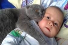 Katzen als Babysitter