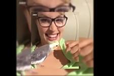 Begabte Vögel