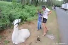 Tiere erschrecken Menschen