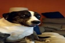 Hund macht lustige Geräusche