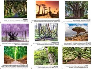 Die spektakulärsten Bäume der Welt