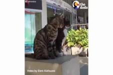 Die talentiertesten Katzen der Welt