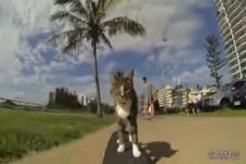 Ein Tag im Leben von der Katze Didga und sein Herrchen Ollie