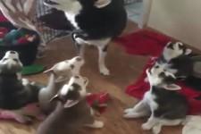 der Hundechor